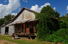 Seed House No. 3 (davidwilliamreed) Tags: old rusty crusty metal kudzu barn abandoned neglected forgotten decay patina delapidated