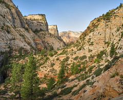 Zion Panorama (Valley Imagery) Tags: stitched zion national park utah usa summer hike hard hot mountain exercise pine tree color blue walk climb sony a99ii tamron 1530