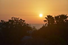 Sonnenaufgang an der Küste von Luz (Lagos), Algarve (3) (Chironius) Tags: portugal algarve luz atlantik atlantischerozean atlanticocean morgendämmerung sonnenaufgang morgengrauen утро morgen morning dawn sunrise matin aube mattina alba ochtend dageraad zonsopgang рассвет восходсолнца amanecer morgens dämmerung asterids lamiids lamiales lippenblütlerartige oleaceae ölbaumgewächse baum bäume tree trees arbre дерево árbol arbres деревья árboles albero árvore ağaç boom ölbäume olea olivenbaum träd gegenlicht baumsilhouette himmel sky ciel cielo hemel небо gökyüzü