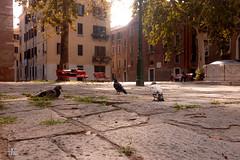 Venice, Italy Selection (Ukelens) Tags: ukelens italy italien italia venedig venice venezia summer sommer beach strand sonne sonnenschein sonnenstrahl sonnenuntergang sonnenstrahlen sonnenaufgang sonnenlicht sun sunbeam sunset sunstream sunlight sunrise sunbeams lightroom light lights lighteffects licht lichter lighteffect lichteffekt lichteffekte lightshow li stadt town mediterran mediterranean holidays ferien meer sea shadow schatten