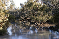 View of the Warrego River (oz_lightning) Tags: australia canon6d canonef100400mmf4556lisiiusm eucalyptus fordsbridge myrtaceae nsw ecology landscape nature outback river rural trees water woodland newsouthwales aus