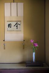 Today in Hagi, Yamaguchi (DanÅke Carlsson) Tags: japan japanese kakejiku tokonoma picture scroll hanging alcove vase flowers tulips spring calligraphy wall traditional corner