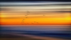 Colors Are The Smiles Of Nature (Christina's World Off and On) Tags: icm intentionalcameramovement seascape sea sandiego seagull seaside seashore outdoors ocean pacificocean pacific socalifornia delmar torreypines touristattraction beach nature natureabstract birds blue flockofbirds flying birdsflying sunset sunrise sky markrothko abstract movement digitalart dramatic digitalpainting dark dusk goldenhour shore creative california colorful colors yellow orange landscape textures painterly impressionism pelicans water