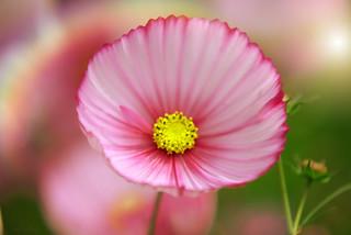 Big Pink...