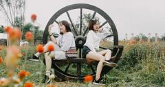 IMG_4597 (Haru2212) Tags: girl ngoàitrời người lightroom nature natural naturalbeauty canon sunday canon450d smile magic vietnamese vietnam flower portrait cây