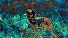 mani-806 (Pierre-Plante) Tags: art digital abstract manipulation