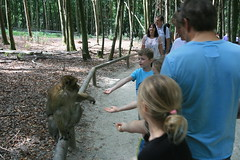 IMG_8771 (harleyhurricane1) Tags: monkeys handfeedmonkeys feedmonkeyspopcorn affenbergsalem barbarymacaques storks deer badenwurttemberg germany