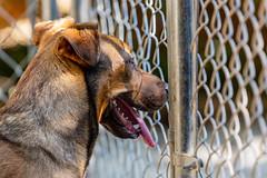 Jif15Sep201830.jpg (fredstrobel) Tags: dogs pawsatanta pets atlanta animals usa ga places pawsdogs decatur georgia unitedstates us