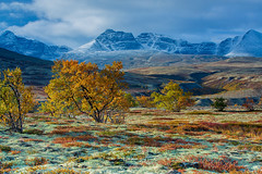 Autumn in Rondane National Park, Norway (B.AA.S.) Tags: rondane nationalpark autumn colors autumncolors nature beautyinnature hedmark tree moss lichen snow mountain idyllic colorful colours morning sunlight 2018 september fall nasjonalpark norway norge natur nopeople natural travel hiking cold multicolored