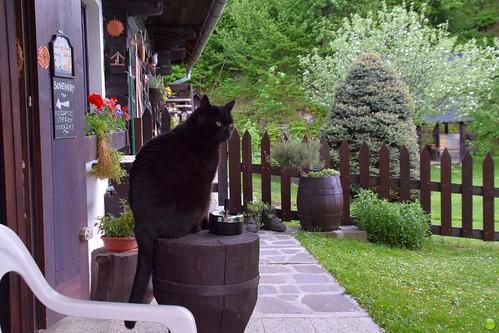 Guarding cat