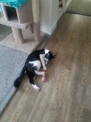 20180711_073229 (sobca) Tags: cat kottur kitte eesa miu kat pussi kato chat katze popoki gatto chatool billi felis cattus gato katt meo кошка बिल्ली 猫 γάτα vighro ᏪᏌחתול