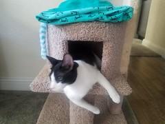 20180711_072552 (sobca) Tags: cat kottur kitte eesa miu kat pussi kato chat katze popoki gatto chatool billi felis cattus gato katt meo кошка बिल्ली 猫 γάτα vighro ᏪᏌחתול