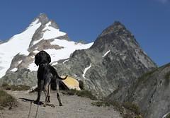 en route pour la Tête de Ferret (bulbocode909) Tags: valais suisse italie valferret grandcolferret chiens frontières montagnes nature neige sentiers bleu vert jaune
