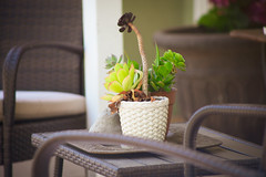 moment of zen [Day 3522] (brianjmatis) Tags: chair succulent patio plant photoaday porch project365 sanluisobispo california unitedstates us