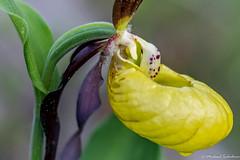 DSC_2170-2 (michael.tschiderer) Tags: heimat blumen tschiderer michael lechtal natur tirol ausserfern reutte am lech baggersee see tiere weisenabch
