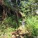 Trails around Preah Khan of Kampong Svay