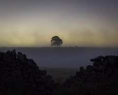 The Ash Tree (Malajusted1) Tags: ash tree malham lings malhamdale malhamcove mist silhouette fog weather limestonepavement yorkshire dales national park skipton nature sunrise dawn morning trees gordale