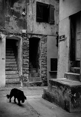 Good ol' dog (▪ Paul Blanchard ▪) Tags: corsica streetphotography bonifacio colours blackandwhite people roadsign dog oldstreet stonewall light shadow contrast architecture lamppost broken dirty street photograph mother kid cat twilight colour lampost shadows silhouette stars field winter lowkey brickwall mistymoutain mist waterdrops leaves nature scotland landscape ajaccio pyrenees lacoo waterfall oldpeople