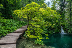 Plitvice - am Holzsteg (AnBind) Tags: kroatien ereignisse ausland 2018 süden orte urlaub plitvičkajezera ličkosenjskažupanija hr
