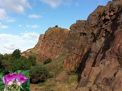 Ancient Youth. Roses and the Salisbury Crags, Edinburgh, Scotland, United Kingdom (Rana Pipiens) Tags: rose jameshutton evolution geology stone volcano autumn salisburycragsedinburghscotlandunitedkingdom samsung