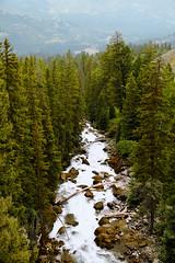 Lake Creek (wyojones) Tags: wyoming lakecreek clarksforkvalley shoshonenationalforest trees creek stream rapids whitewater haze mist