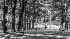 Running (BW) (ghismou1981bo) Tags: bw blackwhite forest running run trees leaves street streetphoto