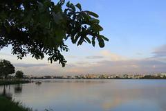 IMG_4954 (mohandep) Tags: madivala lakes bangalore wildlife scenery sun flowers insects birding buses