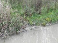 DSCN9975 (Gianluigi Roda / Photographer) Tags: autumn october 2012 creeks streams lavinocreek countryside autumncolors pianura campagnabolognese