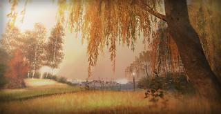 autumn garden shadow