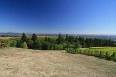 IMG_6607 (willsonworld) Tags: willamette valley wine tasting dan diane cat jose david dave grapes 2014