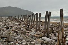 A grey day on Conwy Beach (Apionid) Tags: coast seaside conwy beach stones posts wood dog labrador werehere hereios nikond7000