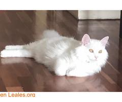 ¡¡ PERDIDA EN LAS PALMAS !! (Leales.org • tu guía animable) Tags: adopta adoptar adoptanocompres noalmaltratoanimal adopción sebusca extraviado perdido perro gatos lealesorg