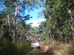 Niassa NR bush