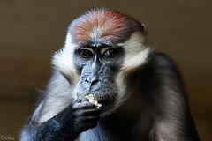 PICT2087 (GF Hardy) Tags: zoo karlsruhe