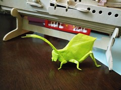 Leaf Katydid (GGIamBatman) Tags: origami papiroflexia paper insect insecto leaf katydid hoja verde brian chan