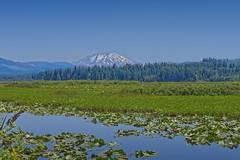 Mt St Helen's Spirit Lake 9047 B (jim.choate59) Tags: on1pics jchoate mtsthelens spiritlake mountain pond forest volcano washington