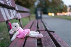 Lost companion (19.08.2018) (Siebbi) Tags: bench bank verloren lost stofftier stuffedanimal plushtoy schaf sheep puppet puppe doll