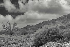 Franklin Mountains (Barb McCourt) Tags: nikonphotography nikon cactus borderland bw bnw blackandwhite blackandwhitephotography rocks desertexploration desertlandscape desertvegetation desertsouthwest clouds mountains texas elpaso franklinmountains
