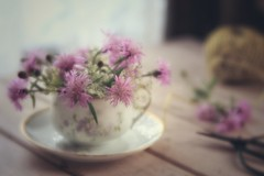 bountiful (s@ssyl@ssy) Tags: vintage antique limoges teacup mauve lensbaby velvet56 inmyshedofcourse weedsfromtheroadside seasonal cuttings
