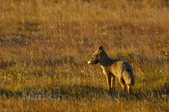 ESCUELA DE FOTOGRAFIA (Thanks for the 350.000 views) Tags: afiapartarteanimalaméricaamericabeautifulchilecolorclasesdefotografiacursospersonalizadosd7100desenfoqueelisardominksescueladefotografíafotografíafinepastohierbaphotographerphotographynikonnikoncolorlandscapenaturenaturalez animales animals animaux animali tiere animais dieren animal hierba mamífero campo