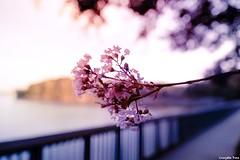 Remember me (gusdiaz) Tags: bokeh depthoffield fujifilm fuku xt2 nature naturephotography sunrsise amanecer closeup flores retoños caminata lago lake ocaso hermoso beautiful