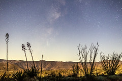 Milky Way With Moonlit Foreground In the Anza-Borrego Desert 1 (slworking2) Tags: julian california unitedstates us desert anzaborrego anzaborregodesertstatepark sky agave ocotillo