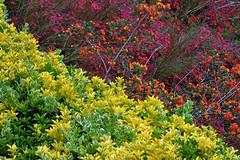 Colours of Nature (natureloving) Tags: nature diagonal coloursofplantsnaturelovingnikond90nikon afs dx nikkor 18300 mm f3563g ed vr