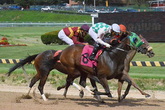 "2018-08-31 (76) r5 much tighter run for place, show and 4th (JLeeFleenor) Tags: photos photography maryland marylandracing timonium mdstatefair fair horseracing outside outdoors jockey جُوكِي ""赛马骑师"" jinete ""競馬騎手"" dżokej jocheu คนขี่ม้าแข่ง jóquei žokej kilparatsastaja rennreiter fantino ""경마 기수"" жокей jokey người horses thoroughbreds equine equestrian cheval cavalo cavallo cavall caballo pferd paard perd hevonen hest hestur cal kon konj beygir capall ceffyl cuddy yarraman faras alogo soos kuda uma pfeerd koin حصان кон 马 häst άλογο סוס घोड़ा 馬 koń лошадь"