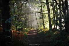 Sensation d'automne. (steflgs) Tags: nature brouillard fog tree arbre randonnée gorre limousin hautevienne