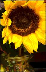 (Cliff Michaels) Tags: iphone8 photoshop pse9 kroger flowers