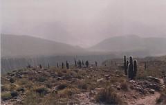 Sol (Nico Jimènez) Tags: zenit122 zenit zenitusers colorplus200 cactus helios44 lomo lomography lomografia film nofilter analog analogo argentina