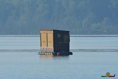 A-LUR_7158 (OrNeSsInA) Tags: trasimeno umbria italia toscana lago nature tuscany rettile