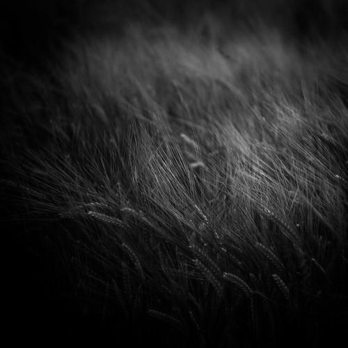 "Harvest V • <a style=""font-size:0.8em;"" href=""http://www.flickr.com/photos/110479925@N06/44604930272/"" target=""_blank"">View on Flickr</a>"