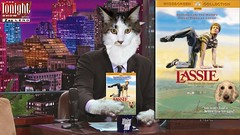 Zaz Leno (redmufffan) Tags: tvshow desk cat mainecooncat dog goldendoodle pets digitalart
